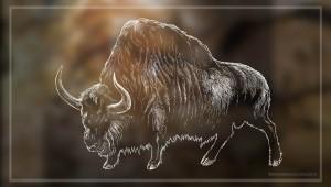 MAMMUTS - Bison priscus