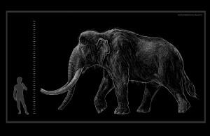 Prärie-Mammut