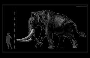 Südliches Mammut